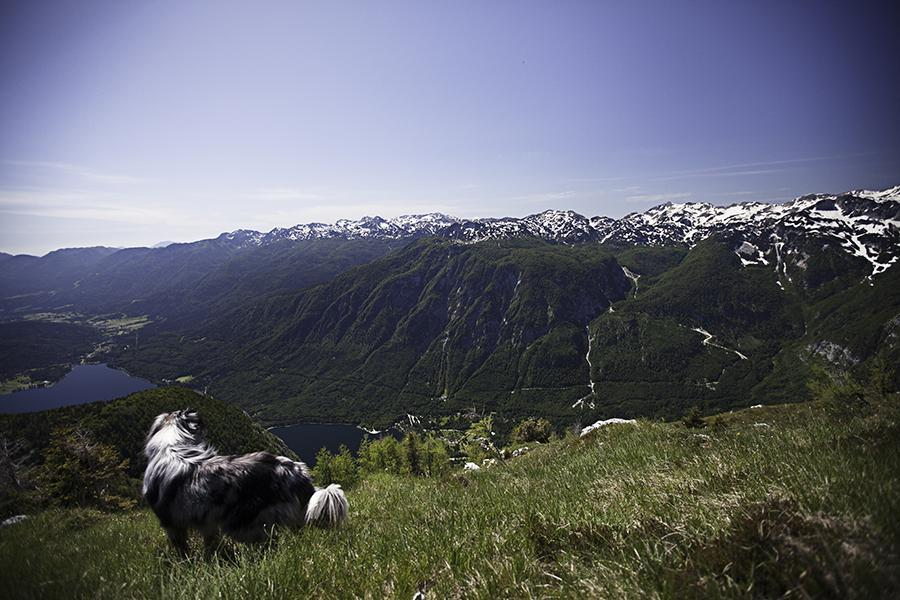 Tura čez bohinjske planine