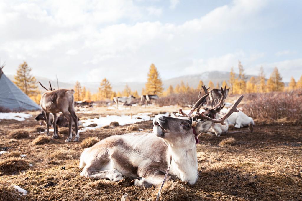 Tsaatan duhka people taiga mongolia (1)