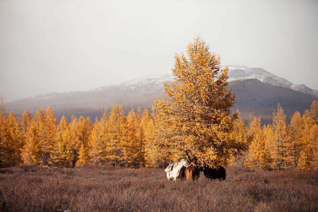 mongolia-taiga-autumn